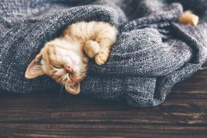 un chat bien dans sa peau mal de dos